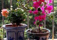 """3種家中""""垃圾"""",原來是""""天然磷肥"""",只需用1點,花朵開不停!"""