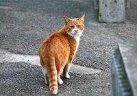 闢謠,滯銷布偶貓被棄只是誤傳,三種貓咪處理方式令它們深受其害