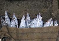 老吾老說:患有肝炎的人的人千萬不要錯過這種魚,你知道嗎?