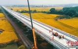 航拍在建昌贛高鐵泰和贛江特大橋 如巨龍穿越金色稻田