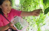 西瓜和雞蛋比誰大?5歲娃都知道的答案,在這裡偏偏錯了,咋回事