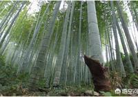 有20畝的荒山,投資種毛竹,可行嗎?