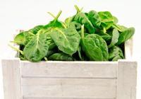 胖從口入?推薦6種最適合秋季減肥的食物