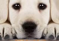 別吹捧《忠愛無言》是中國影史第三!比《忠犬八公》還差得遠