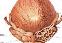 別把前列腺不當回事,男人前列腺如何保養