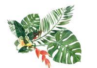 50種精選鮮花的花語,不同顏色寓意也不一樣啊