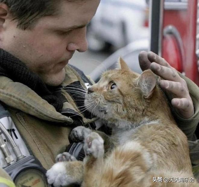 你不知道貓咪有多麼愛你,十三張貓咪和他們主人甜蜜生活的照片