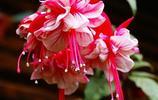 假如你買了別墅,建議庭院種這些植物花,花開滿園,一里飄香