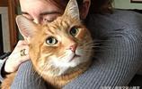 """這種貓咪除了""""胖胖"""",你還得知道""""橘貓""""的這幾件事?"""
