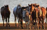 風光圖集:六郡良家最少年 戎裝駿馬照山川