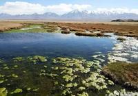 肅北鹽池灣——我剛走進一個童話
