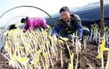 """江西53歲農民成蔬菜""""發明家"""",泥土裡刨出致富路,年收入百萬"""
