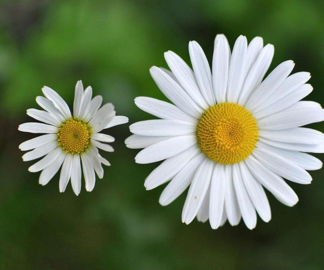 高清圖片欣賞(花卉類二)