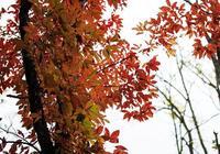 涼風四起,秋意漸濃