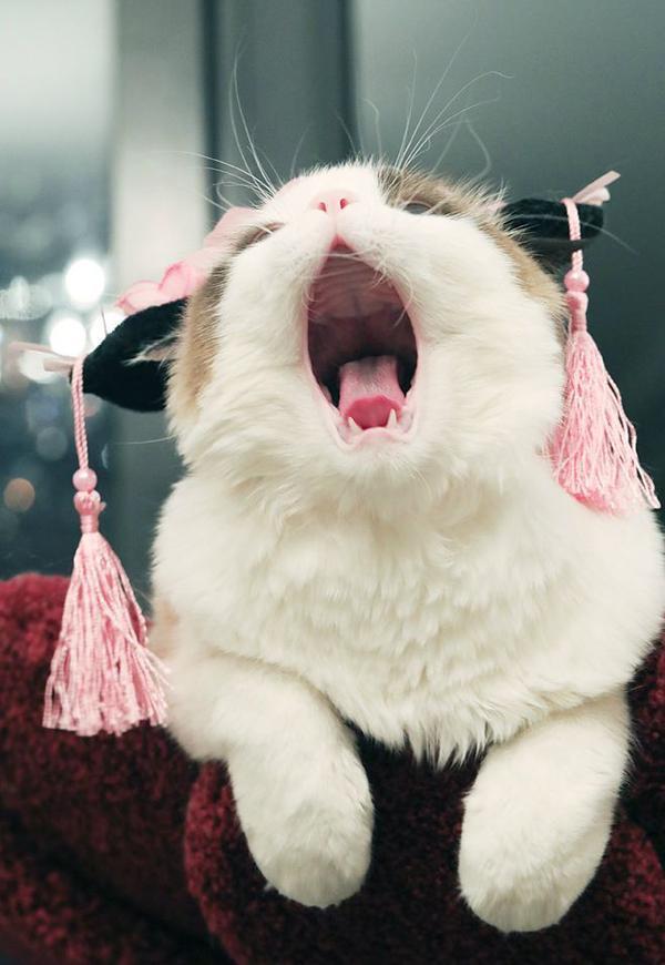 """打貓會記仇嗎?這樣""""打""""貓才能讓它越來越乖,還不讓它受傷"""