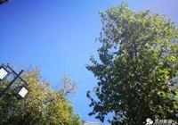 別被藍天白雲騙了,太湖防總已經啟動防汛Ⅲ級應急響應,氣象臺稱……