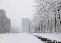 東北局部將迎暴雪,玉米可適時分批出售!