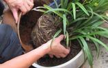 養花換盆不懂這3點,那就千萬別亂換了,你永遠等不到植物開花
