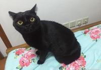 去燙個新發型回來家裡的貓咪就不認識我了,整個貓都炸毛了呢!