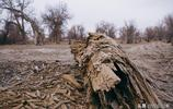 (圖說)冬日新疆巴州輪臺塔里木胡楊林,見證生命悲涼輝煌之美。