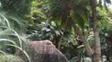 5米高的鐵樹你見過嗎?就在深圳仙湖植物園內