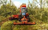 15張圖告訴你,原來美國農民是這樣摘蘋果,這效率提高不止百倍!
