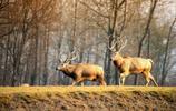風景圖集:麋鹿苑風景美圖
