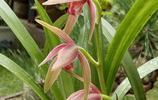 奶奶往花盆裡放這3種料,種植出來的蘭花品質好、 檔次高,花店老闆都想來買