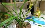 這花開的我有點看不懂了,大家覺得這是蘭花嗎?變異了還是新品種