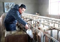 在村裡養豬合法嗎?
