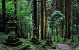 攝影圖集:上色見熊野座神社,動漫螢火之森的原型,或妖怪的世界