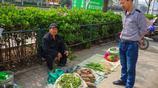 """皖北老人進城賣田野裡""""野菜"""",6元一斤,好吃而且藥用價值高"""