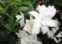 香氣十足的花卉,這些植物你都見過嗎?動手剪一剪保證好看到爆