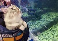 鏟屎官帶貓咪逛街,一到水族館時,貓咪的表情瞬間亮了