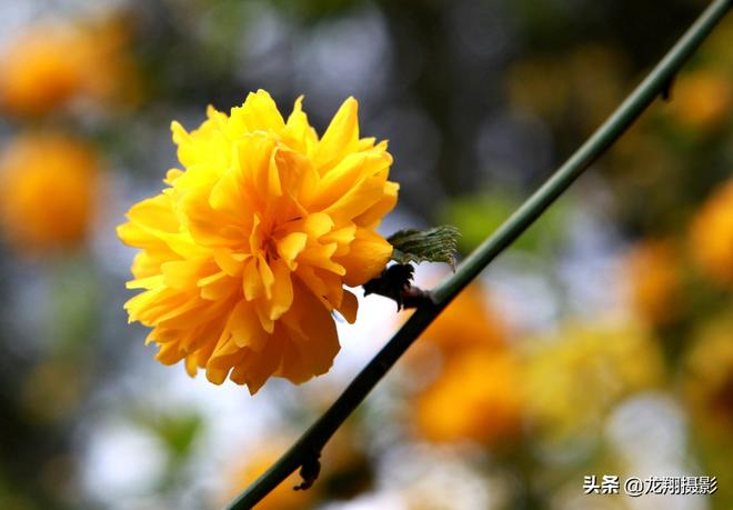 2019年11張照片告訴你!三月第一個週末我和關嶺的春天有個約會!