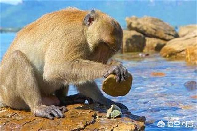 請問,人群與猴群之間有什麼異同?