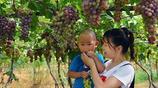 碭山縣:大棚葡萄自採園,引客來