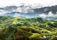 侗族瑰寶-神祕古茶