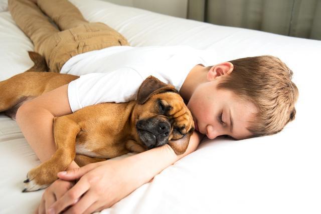 你知道嗎?狗狗睡覺也會做夢,夢裡面大部分都是你哦!