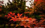 將府公園秋色滿園,紅黃交錯,關鍵是人少免費