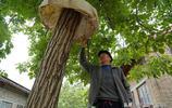 """山西農村83歲老人發明防鼠""""神器""""百發百中,看看是個啥樣子"""