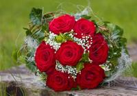 情感測試:4朵鮮花,你最喜歡哪朵?測你將要有什麼好事發生?