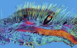 科技原來可以如此優美!令人不可以思議的生物醫學照片
