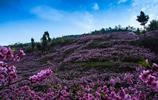 丹鳳縣的桃花谷景區的美,你見過沒?