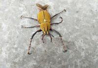 這是什麼昆蟲?
