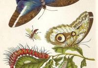 說來你不信,300年前的人類真不知道蝴蝶是從哪兒來的 科學美圖