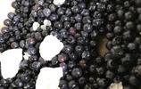 又到了做藍莓果醬的季節千萬不要錯過哦,分分鐘搞定!