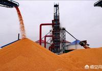 專家說農民賣玉米得把握好時機,如何判斷玉米價格到了階段性高點?會有哪些表現?