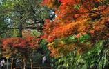 隨拍公園 - 重慶鵝嶺公園
