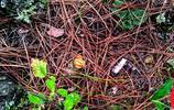 雲南菌子季,這麼多的小蘑菇,我一次能吃一大碗!